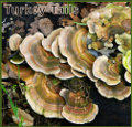 turkeytails_120x115